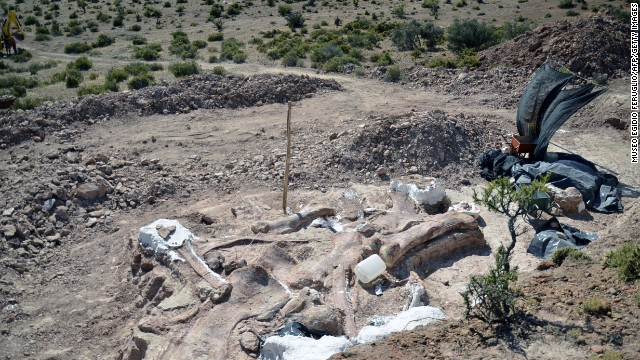 The partially uncovered fossils can be seen in the area where they were discovered.