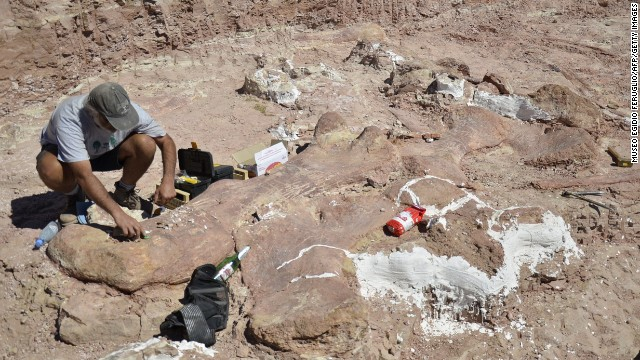 A technician works on one of the fossils.