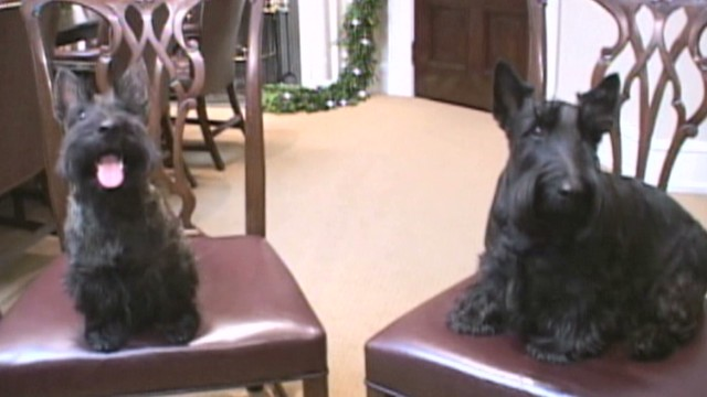Bush family mourns pooch Miss Beazley – CNN Political ...