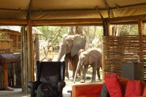 Parque Nacional Mana Pools, Zimbabwe
