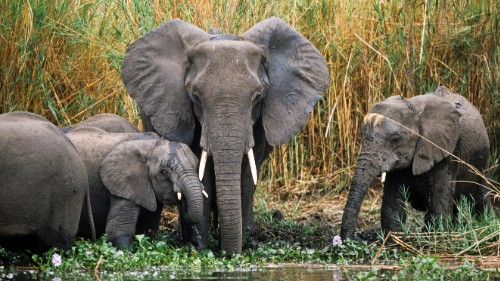 Elephants gather at the water's edge at Liwonde National Park in southeast Malawi.