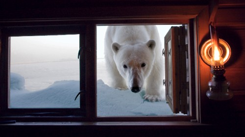 A polar bear peeks into a cabin in Norway's Svalbard Islands.