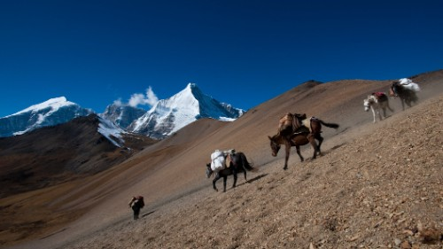 Pack horses descend the 16,000-foot Nyile La pass in the Himalayas.