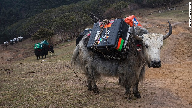 Yaks leaving Base Camp transport the equipment of television crews. The avalanche on April 18 killed 16 Sherpas, the deadliest single event in Everest's history, and attracted much media attention.