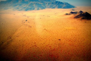 El misterio de los círculos en Namibia