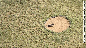 What causes Namibia's fairy circles?