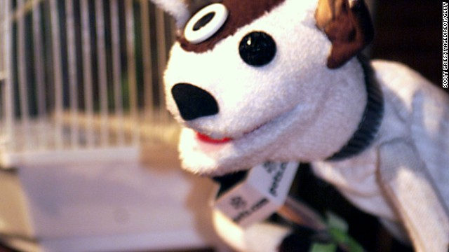 This critter became a symbol for the dot.com bust. It appeared in a Super Bowl commercial and even got its own balloon in the 1999 Macy's Thanksgiving Day parade before Pets.com folded the following year.