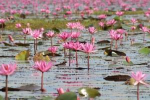 Lago Nong Han, Tailandia