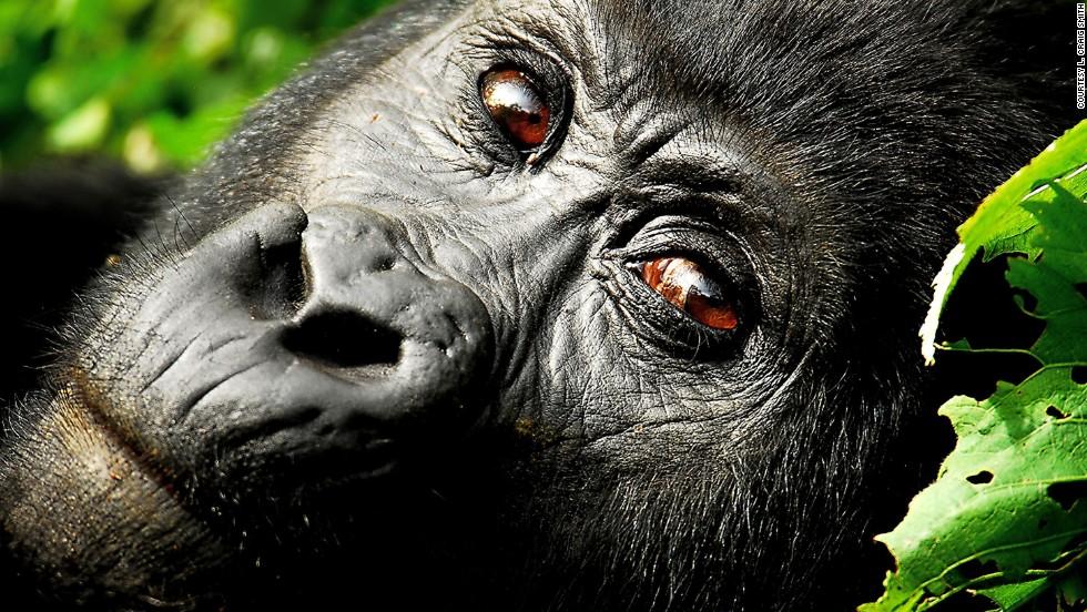53 increíbles fotografías de vida salvaje
