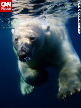 A <a href='http://ireport.cnn.com/docs/DOC-1022157'>polar bear</a> navigates the chilly waters of Repulse Bay, Canada.
