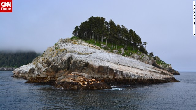 <a href='http://ireport.cnn.com/docs/DOC-918557'>Sea lions</a> nap on a rock in Alaska's Kenai Fjords.