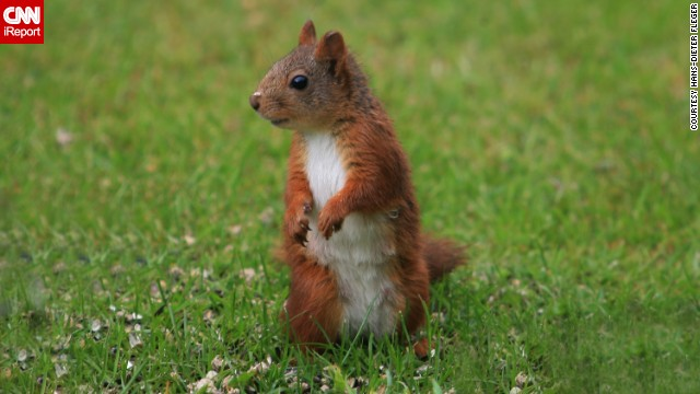 This little <a href='http://ireport.cnn.com/docs/DOC-1135778'>squirrel</a> lives in Atraa, Norway.