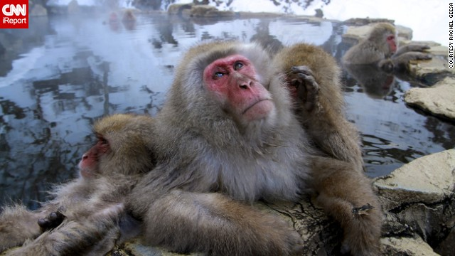 Who knows what this <a href='http://ireport.cnn.com/docs/DOC-850858'>snow monkey</a> is pondering as he relaxes in a hot spring near Nagano, Japan.