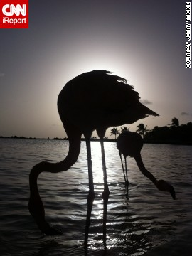 In Aruba, two <a href='http://ireport.cnn.com/docs/DOC-823580'>flamingos</a> are silhouetted on the beach at sunset.