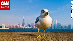 From this angle, this seagull looks like he owns Chicago.