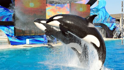 SeaWorld to upgrade killer whale habitats