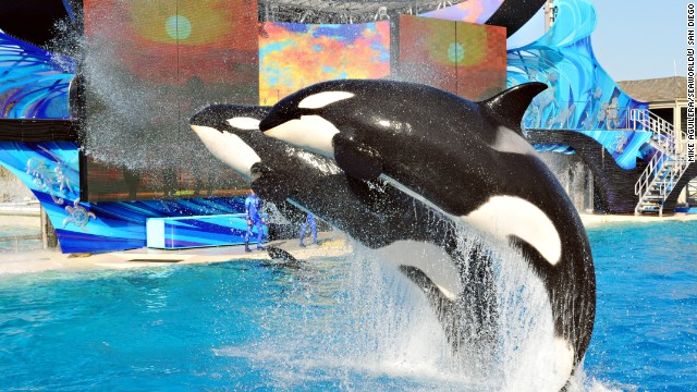 22. While SeaWorld California has come under fire recently, with questions being raised about the care of its whales, visitors keep coming to see Shamu and other marine animals perform.
