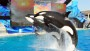 Months after 'Blackfish' airs, debate continues