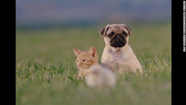 "<strong>""The Adventures of Milo and Otis"" (1986)</strong> - Awww. How can you not love a movie about a cat and a dog's adventures? (Netflix)"
