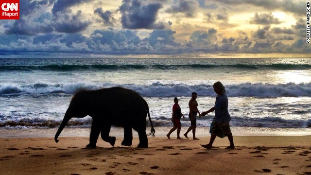 A man follows in the footsteps of a baby elephant on Mai Khao Beach in Phuket, Thailand.