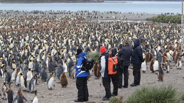 Such voyages offer a once-in-a-lifetime chance to see exotic animals in the wild, such as polar bears, emperor penguins, and...