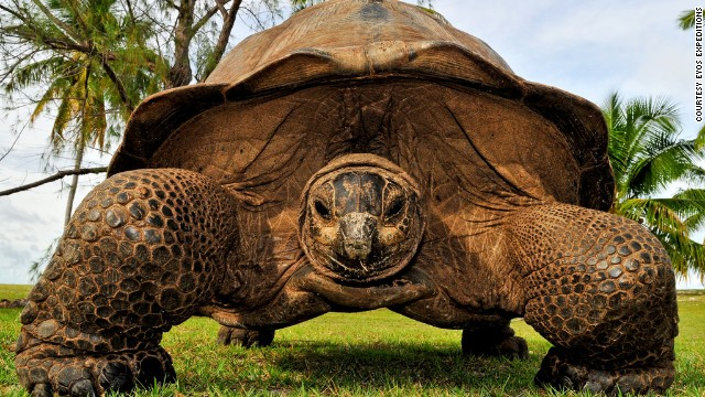 ... giant tortoises. Adventure travel needn't be limited to cold climes, with Eyos also offering superyacht expeditions to remote areas of Papua New Guinea, Vanuatu, and Indonesia.