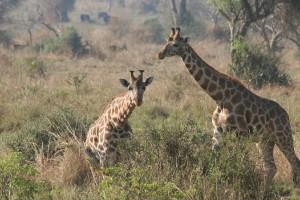 Parque Nacional de las Cataratas Murchison, Uganda