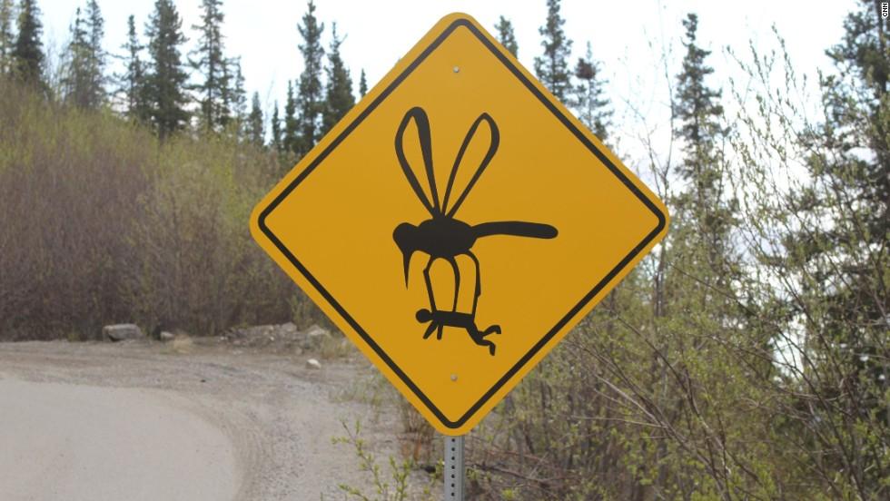 Grande Drive en Denali, Alaska