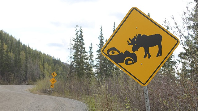 Moose and deer reportedly kill more people in North America than any other mammals, or at least they do when you total up drivers and passengers involved in animal collisions. Moose accidents, though less common than deer-related crashes, are the most likely to result in serious driving injuries or fatalities.