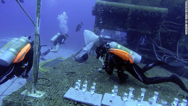 "During his stay Cousteau plans to study how climate change is affecting the ocean's acidity and marine life. Here, two researchers (they like the term ""aquanauts"") prepare science experiments outside Aquarius."