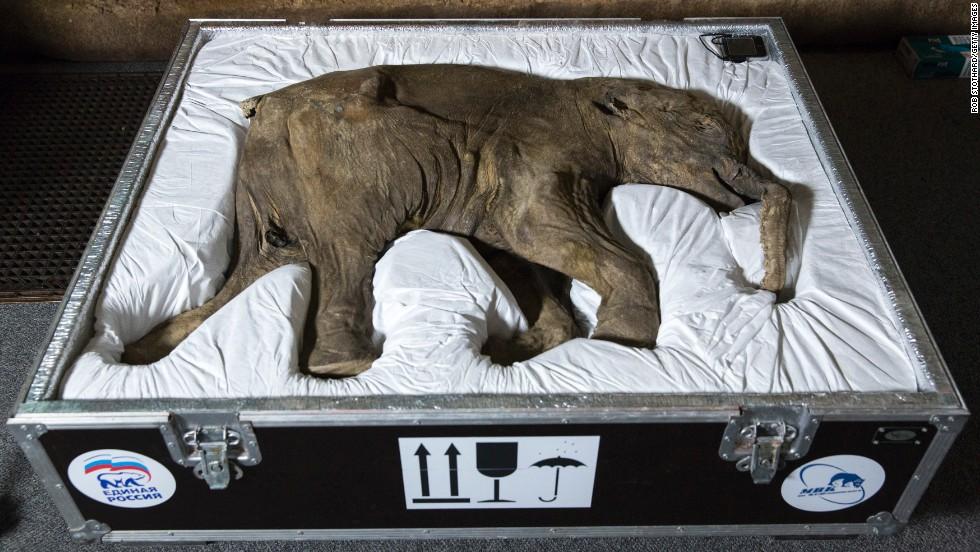 9. Museo de Historia Natural, Londres