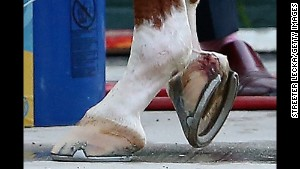 An injury to California Chrome\'s right front hoof gets treated Saturday at Belmont Park in Elmont, New York.