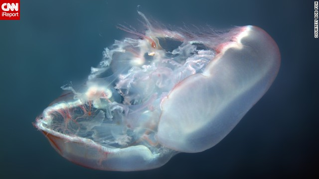 This photo of a <a href='http://ireport.cnn.com/docs/DOC-1142461'>moon jellyfish</a> floating gracefully in the waters of Key West, Florida, is one of Fish's favorite underwater shots he's taken.