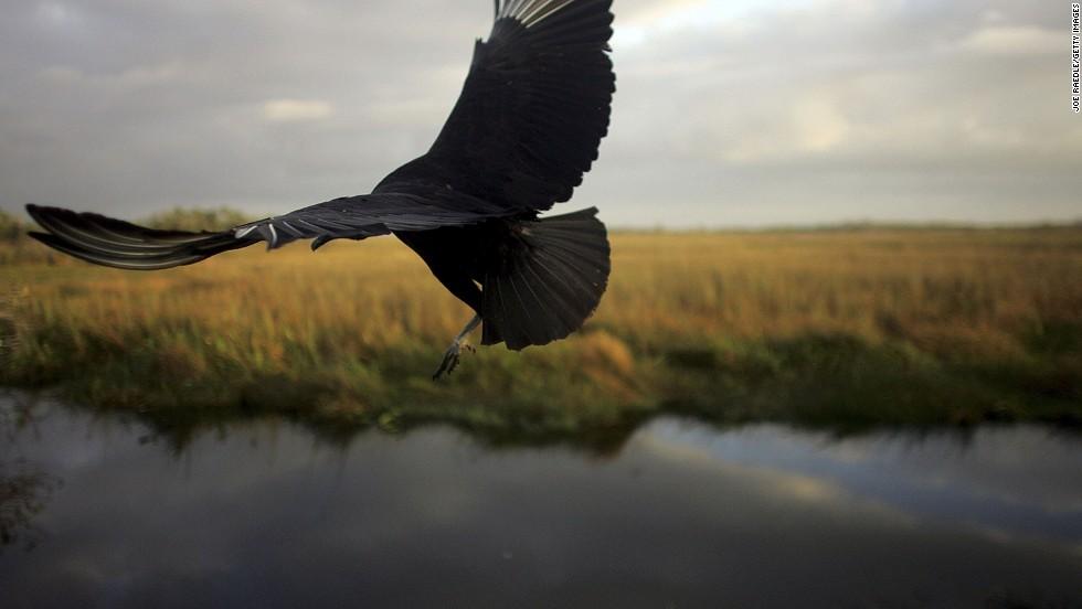 Parque Nacional de los Everglades (Florida