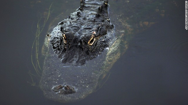 Scratch that. Keep an eye out for alligators, too.