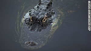 Gator country: You might not be entirely alone in the Florida Everglades.