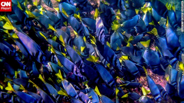 "A sea of fish passed by <a href='http://ireport.cnn.com/docs/DOC-1140684'>Robert Ondrovic</a>'s lens during a 10-day excursion in the Galapagos Islands. Ondrovic said, ""Sometimes you need to go below the surface rather than just scratch it to explore the wonders and beauty of nature."""