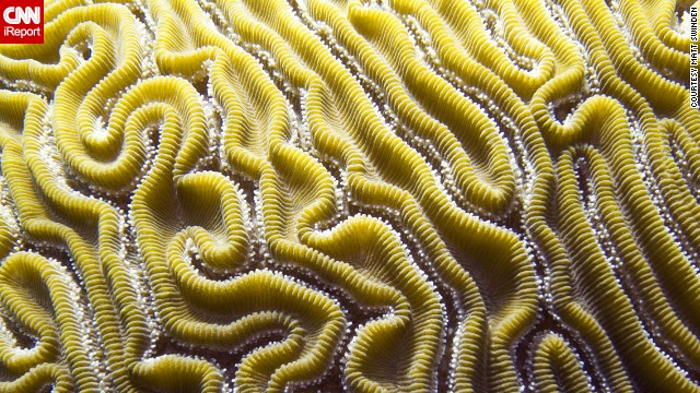 Brains aren't just in your head. Professional photographer <a href='http://ireport.cnn.com/docs/DOC-1140339'>Matt Swinden</a> snapped this macro shot of brain coral during a dive in Isla Mujeres, Mexico.