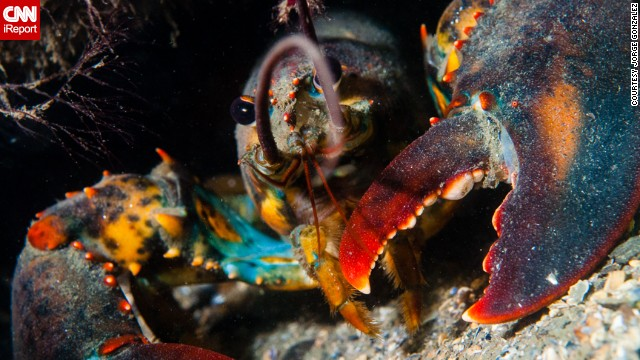 "<a href='http://ireport.cnn.com/docs/DOC-1141709'>Jorge Gonzalez</a> said, ""Relax and be patient. You will be rewarded at the end with a beautiful photograph."" Gonzalez photographed this lobster 45 feet underwater in Groton, Connecticut."