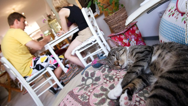 A cat takes a nap in Pee Pees Kaztencafe (Cat Cafe), in Berlin, the city's first feline cafe.