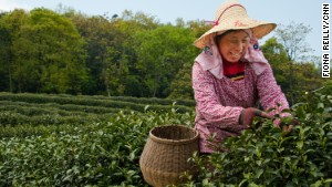 Tea lover's guide to traveling in China