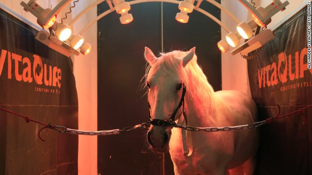 This solarium is at the Spanish Riding School in Vienna, Austria. Many more complex variants are available, incorporating air-drying facilities and even soothing light shows for the horse.