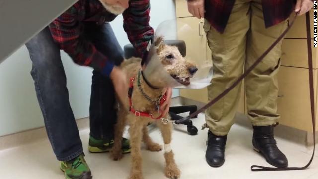 Emocionante video del momento en que un perro que era ciego ve a su familia tras cirugía