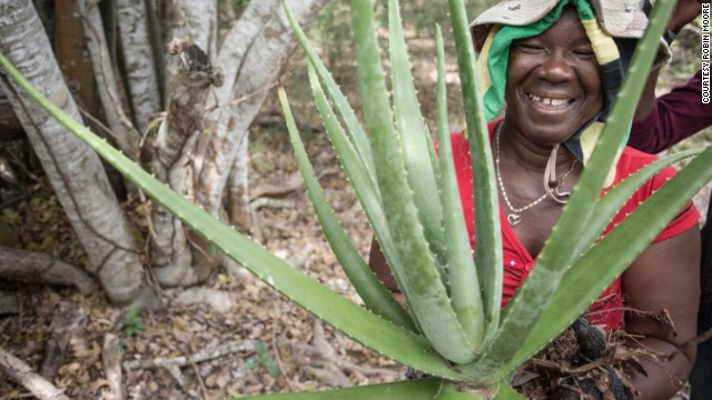 Paulette Coley holds up an aloe plant, abundant on the Goat Islands.