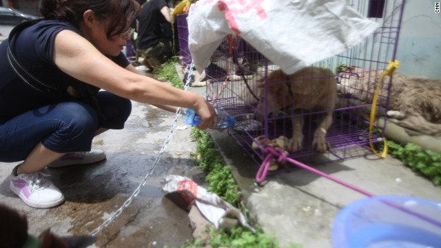 A volunteer from Chongqing pours fresh water for a rescued dog.