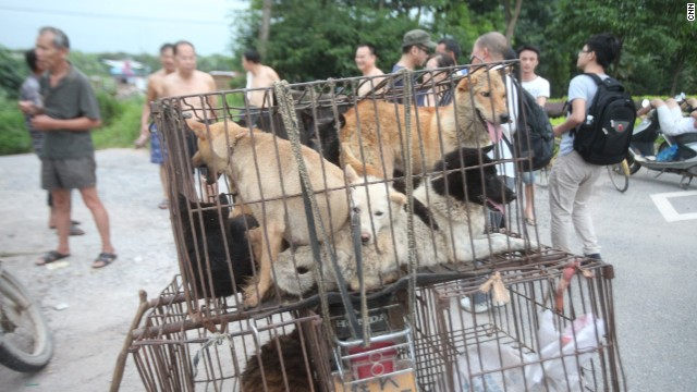Animal activists attempt to buy dogs from a trader, who says he wants triple the market price.