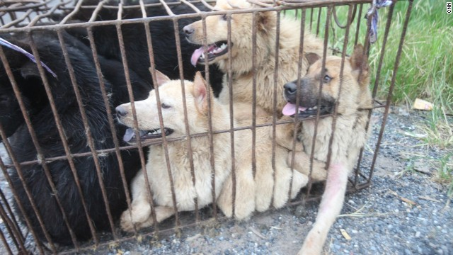 Six dogs are crammed into a cage to be sold to butchers.