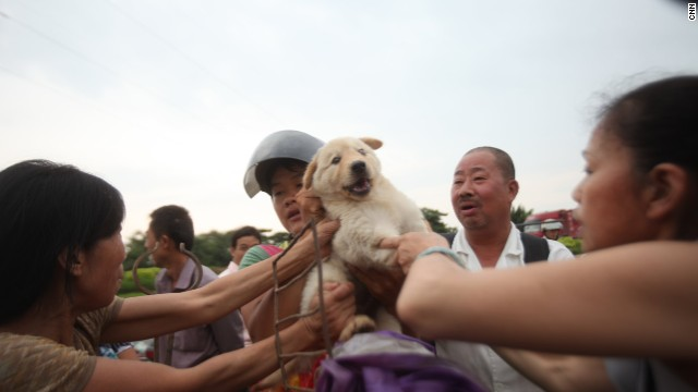 Animal activists try to snatch puppies from a dog trader. The activists had already spent all their money buying 70 other dogs, and were unsuccessful in retrieving this puppy.