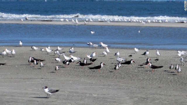 In Georgia, Tybee Island's north end also receives top marks.