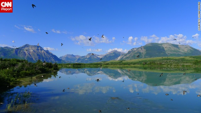 "<a href='http://ireport.cnn.com/docs/DOC-1144530'>Susan Moore</a> stopped to capture the view at Waterton Lakes National Park in Alberta when hundreds of swallows swooped in. ""I loved the chaotic motion of the birds in combination with the tranquil reflection of the mountains,"" she said."